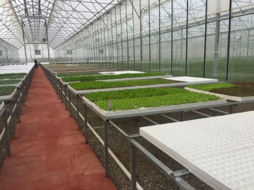 seedling production facilities within rack system setup