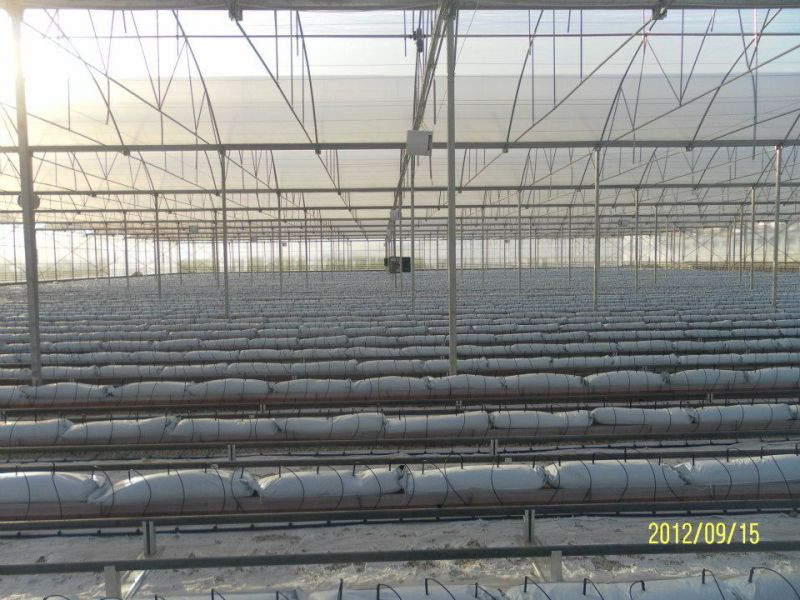 Investments In Modern Greenhouse